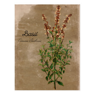 Herbe vintage de Basil de style Carte Postale