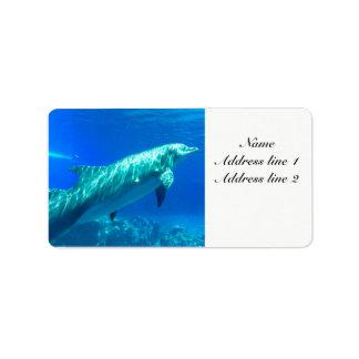 Het adresetiket van de dolfijn etiket