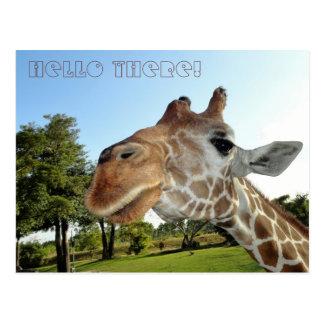 Het Briefkaart/Hello van de giraf daar! Briefkaart
