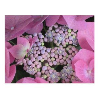 """Het Briefkaart van de Hydrangea hortensia """"sparen"""