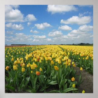 Het gele Landschap van Tulpen Poster
