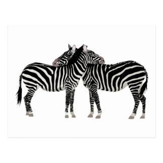 Het koesteren van Zebras Wens Kaarten