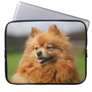 Het Letten op van Pomeranian Computer Sleeve