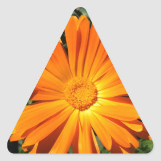 Het oranje Klantgerichte ontwerp van Daisy Driehoek Sticker