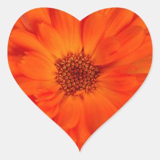 Het oranje Ontwerp van de Goudsbloem Calendula Hart Sticker