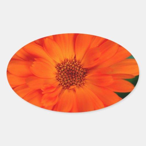 Het oranje Ontwerp van de Goudsbloem Calendula Ovaalvormige Stickers