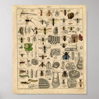 Het vintage Diagram van het Insect Poster