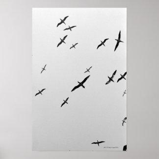 Het vliegen van vogels afdruk