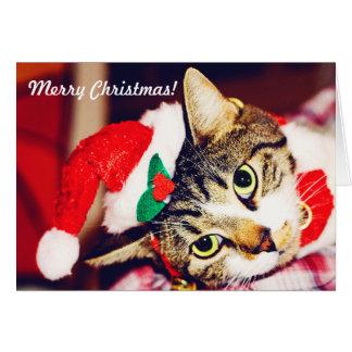 Het Wenskaart van de Kat van Kerstmis
