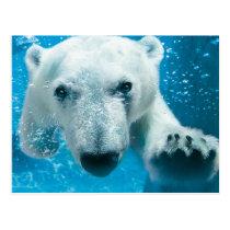 Het Zwemmen van de Ijsbeer Briefkaart