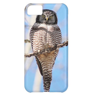 Hibou de faucon du nord coque iPhone 5C