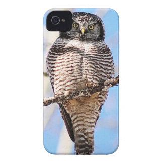 Hibou de faucon du nord coques iPhone 4