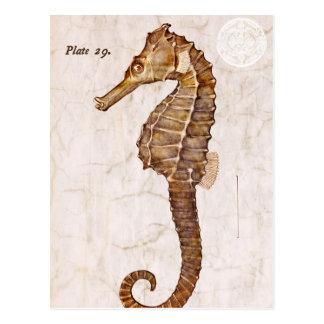 Hippocampe vintage de créature d'hippocampe carte postale