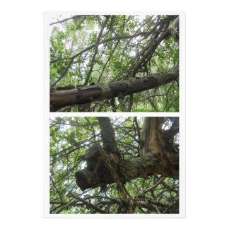Histoire d'arbre impression photo