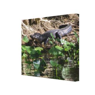 Hongerige Gator Canvas Afdrukken