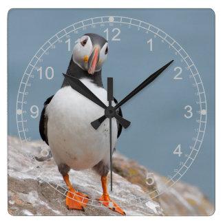 Horloge Carrée Macareux debout