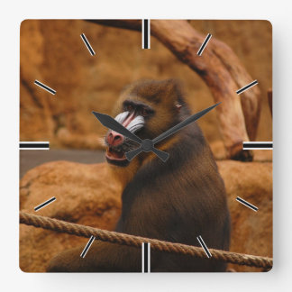 Horloge Carrée Pavian/babouin
