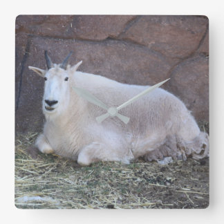 Horloge de chèvre de montagne rocheuse