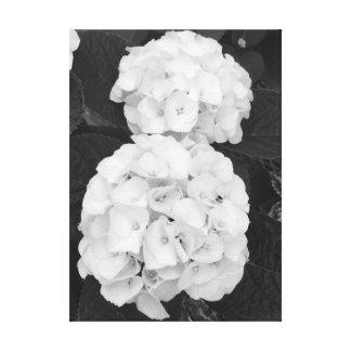 Hortensias noir et blanc toile