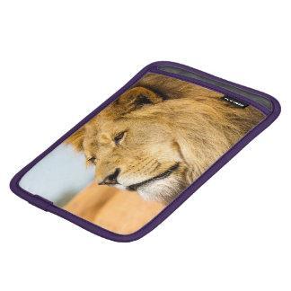 Housse iPad Mini Grand lion regardant loin