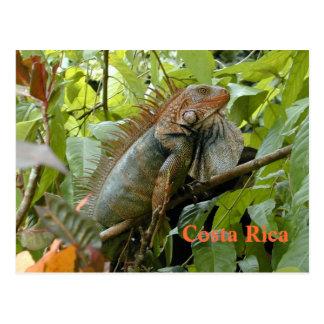 Iguane Costa Rica de carte postale