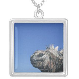 Iguane marin collier