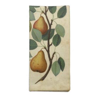Illustration botanique de fruit de serviettes