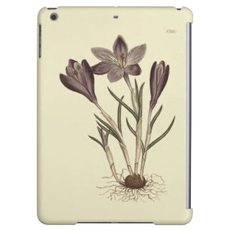 Illustration botanique de grand crocus pourpre de