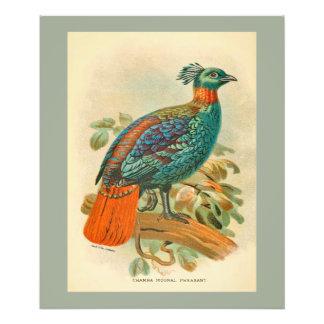 Illustration colorée de faisan d'oiseaux vintages photographies