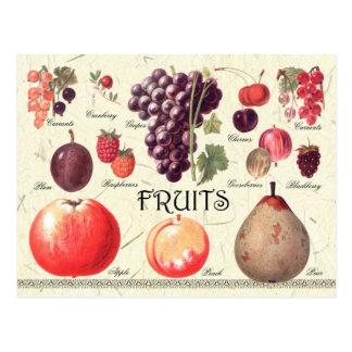 Illustration de fruits carte postale