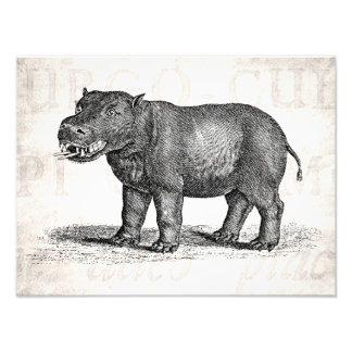 Illustration vintage d'hippopotame de 1800s - photo sur toile