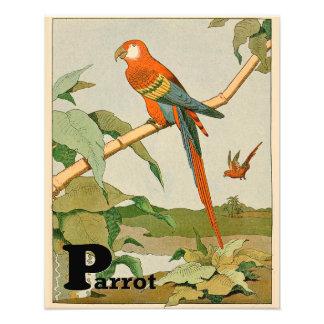 Impression Photo Alphabet orange et jaune de perroquet