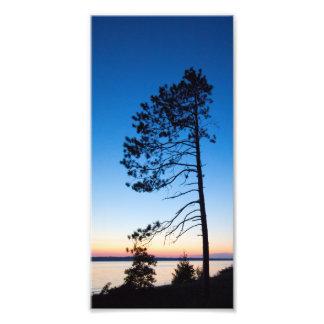 Impression Photo Arbre au coucher du soleil, le lac Michigan,