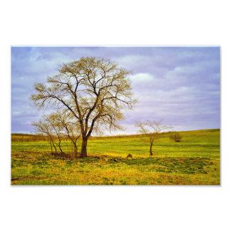 Impression Photo Arbre dans un domaine