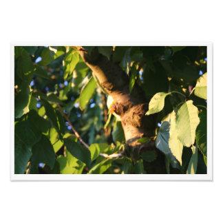 Impression Photo Arbre, feuilles, branches