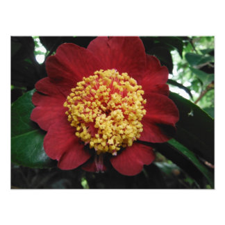 Impression Photo arbre jaune vert rouge de fleur