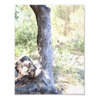 Impression Photo Arbre rustique de région boisée - copie de