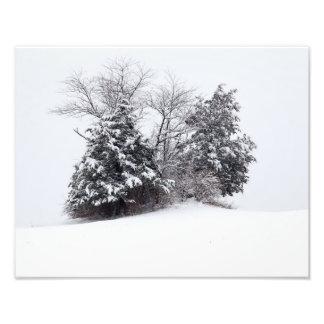 Impression Photo Arbres en hiver