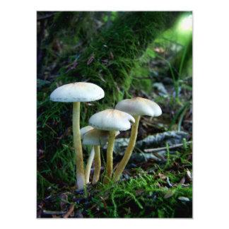 Impression Photo Bébés de forêt