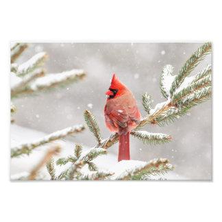 Impression Photo Cardinal d'hiver