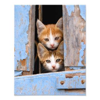 Impression Photo Chatons mignons de chat dans la fenêtre vintage