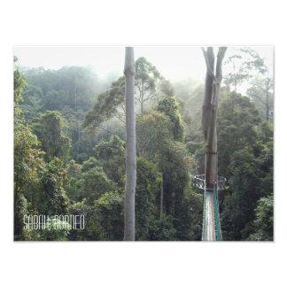 Impression Photo Cimes d'arbre Sabah de jungle de forêt tropicale