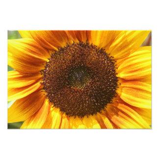 Impression Photo Copie jaune, orange, et de Brown de tournesol