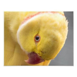 Impression Photo Copie semblable jaune