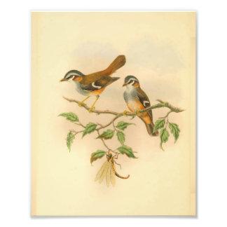 Impression Photo Copie vintage affrontée cendrée d'oiseau orange de