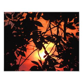 Impression Photo Coucher du soleil par les arbres