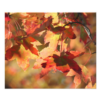 Impression Photo Feuillage d'automne