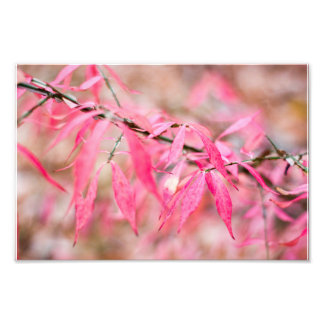 Impression Photo Feuille d'automne rose