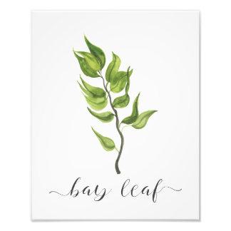 Impression Photo Feuille de laurier botanique d'impression d'herbe
