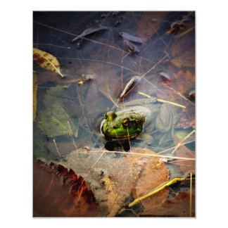 Impression Photo Feuilles de Hidding en automne